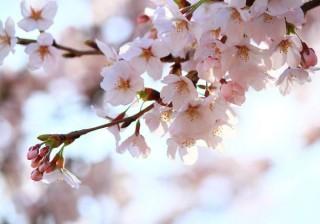 花より団子、より男子!?お花見の季節が一気にやってきました。