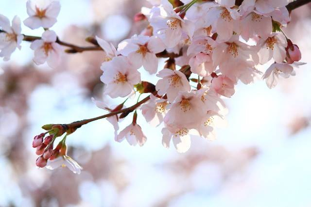 花より団子、より男子!? お花見の季節が一気にやってきました。