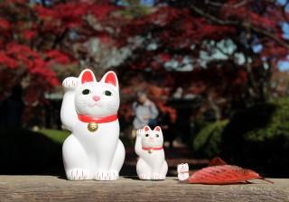 """願いを叶える""""1000体の招き猫""""の絶景が広がる「豪徳寺」。"""
