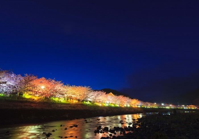河津夜桜ライトアップ