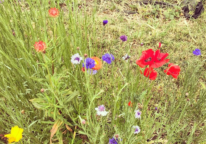 5月のサンフランシスコは花にあふれています。赤い花は青い花になろうとしないし、青い花も赤い花になろうとしない。その美しい姿にハッとさせられます。