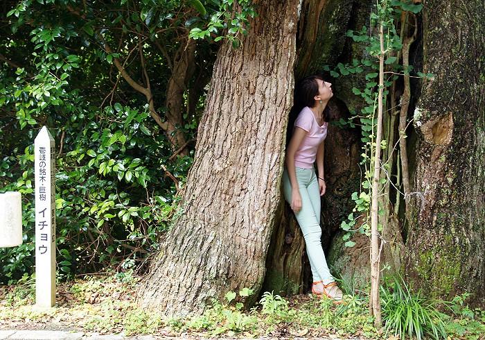 大きな木の中にスッポリ。
