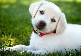 【子犬と一緒!?】年下男子との恋にハマる理由とそのメリット。