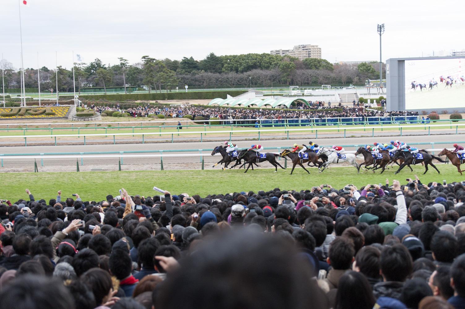 うま部メンバーの目の前を馬たちが駆け抜けると、レースはいよいよクライマックスへ!