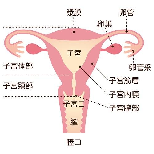 資料1。膣内壁全体に照射します。