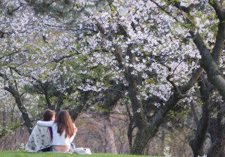 【AB型】「お花見目当ての小旅行でロマンスの予感」