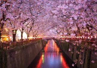【A型】「ロマンチックな夜桜が恋を後押し」