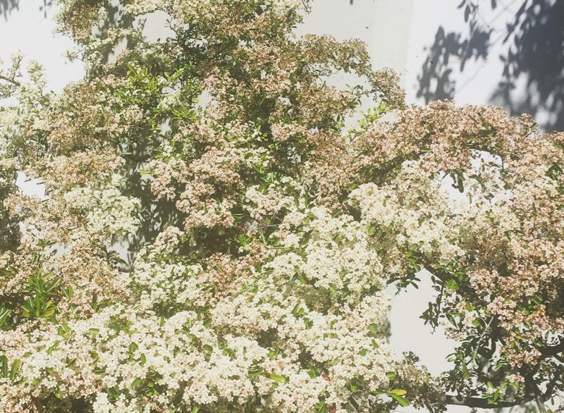 通学途中の道に咲く草花。ベージュ、グリーン、ピンクとあまりに素敵なグラデーションカラーだったので、翌日のファッションの参考にしました。