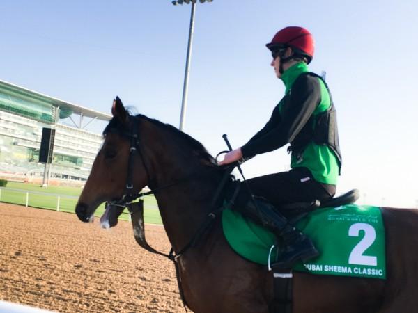 この日は残念ながら日本馬は走りませんでしたが、どの馬も素敵ですね。
