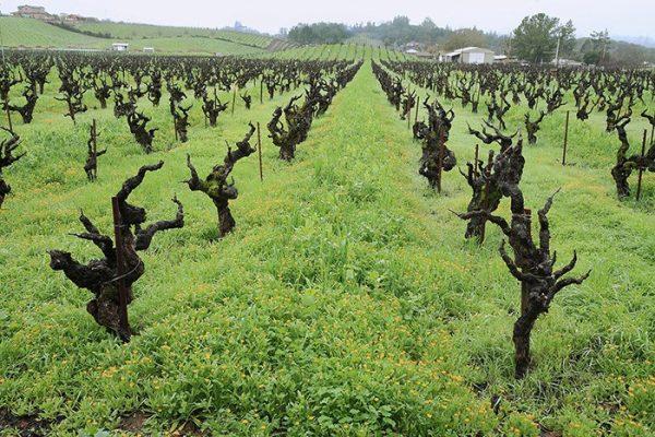 アメリカのワインの90%がカリフォルニアで生産されている。