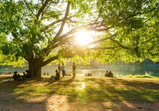 【#anan占い】 草木が芽吹く季節、あなたの運勢は?【2016年5月】