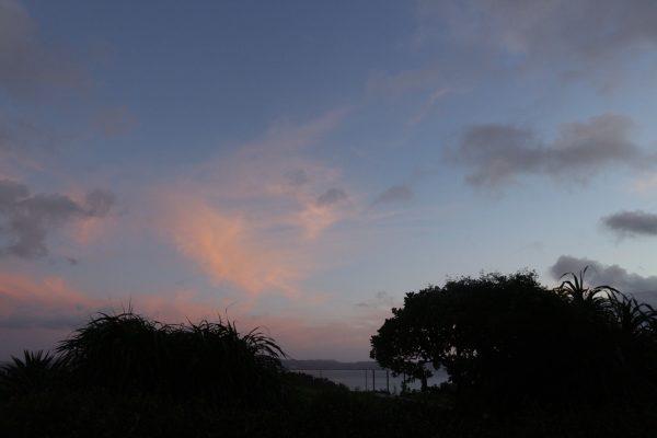 鳥のさえずりが響く早朝の沖縄。