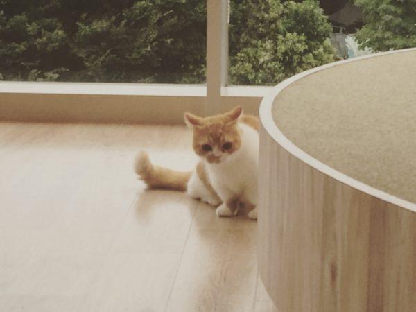 ほかの猫とかくれんぼをしている猫さまの姿です。