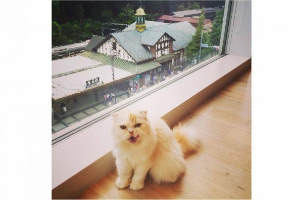 動物写真で何よりも大事なのは、かわいい表情やポーズの瞬間を逃さないこと。決定的瞬間を待つ忍耐力も必要、と教わりました。猫さまが文句を言っているような瞬間を狙って撮った一枚がこの写真です。