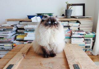 アンアン「夏の猫さま大賞」グランプリはぐーぐーさんに決定!