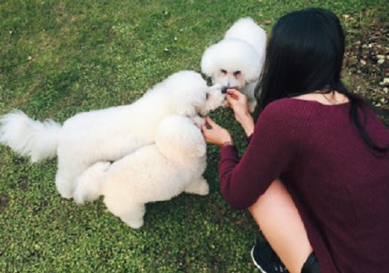 愛犬に会うために北海道に帰省します! 実家にいる3匹の愛犬。やんちゃで天使みたいに可愛くて、メロメロ!