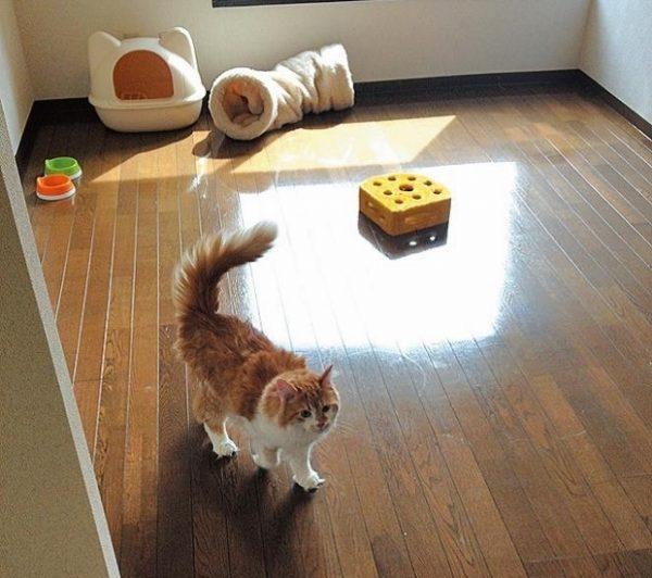 猫つきマンションは住むと同時に里親になれるシステム。