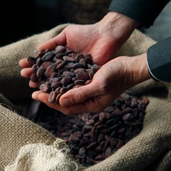 cacao (640x640) (350x350)