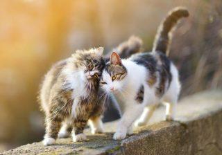 猫を抱っこした娘がまさかの発言! 初めての譲渡会|うちに猫がやってきた! #2