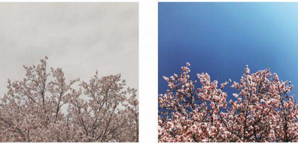 くもり (800×386)
