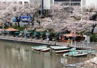 【桜満開!】大好きな彼と♡ お花見のできる都内のカフェ厳選4軒