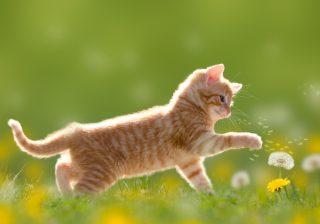 猫を飼うのに必要なアイテムとう〇ちまみれの新生活|うちに猫がやってきた! #4
