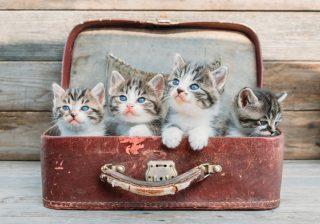 譲渡会で出会えた子猫に隠された秘密…。保護してくれたTさんのこと|うちに猫がやってきた! #3