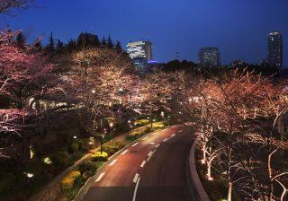 春デートは六本木でアートと桜のW鑑賞を♡ お花見もできる展覧会3選!