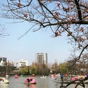 上野でアートと桜の春デート♡ 和の展覧会+お花見スポット2選