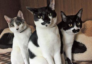 猫さま大賞・準グランプリに決定! まとまり感◎の兄弟ネコとくるりんカールの…♪