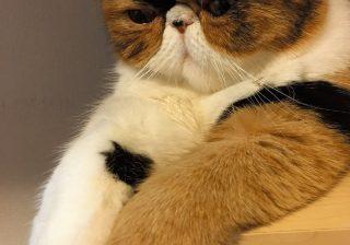 猫好きあるある! 変態的萌え~なポイントとは?