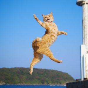 目黒がニャンだらけ! かわいい猫アート約1000点が集合!
