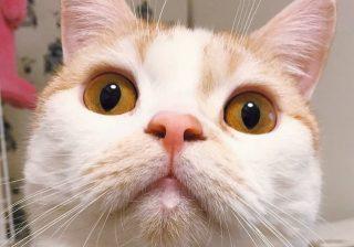 """""""ケツアゴ""""に""""ニャンモナイト"""" 可愛さ溢れる悶絶猫たち♪"""