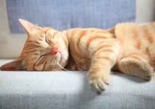 【奇跡が起きた!】譲渡会で出会った保護猫の誕生ストーリー|うちに猫がやってきた! #5