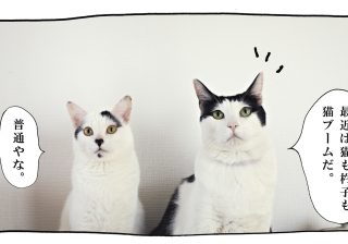 【猫写真4コママンガ】パンチョとガバチョ 「心理テスト」 #43