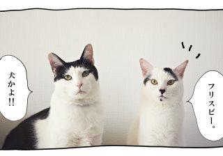 【猫写真4コママンガ】パンチョとガバチョ 「それはちょっと」 #44