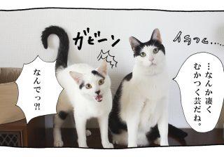 【猫写真4コママンガ】パンチョとガバチョ 「ジェラシー」 #45