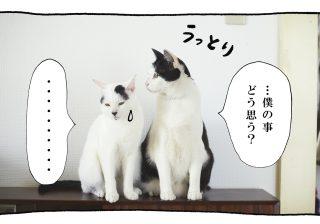 【猫写真4コママンガ】パンチョとガバチョ 「ご要望にお応えして」#47