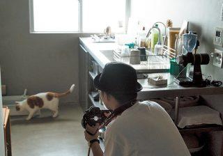 猫をかわいく撮るコツ、まずは自然光! プロが教える3つのポイント