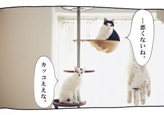 【猫写真4コママンガ】パンチョとガバチョ 「ちょっとまて Part2」#46