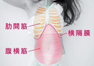 くびれを取り戻せ! インナーマッスル「呼吸筋」トレーニング