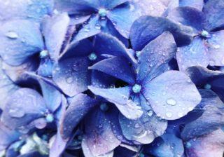 【梅雨写真でいいね獲得!】インスタジェニックな雨の撮り方をプロ伝授|スマホ撮影テク  #24