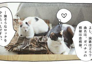 【猫写真4コママンガ】パンチョとガバチョ 「兄さんのシャー」#50