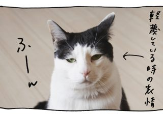 【猫写真4コママンガ】パンチョとガバチョ 「読み取りマニュアル パンチョ編」#51