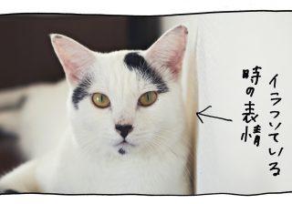 【猫写真4コママンガ】パンチョとガバチョ 「読み取りマニュアル ガバチョ編」#52