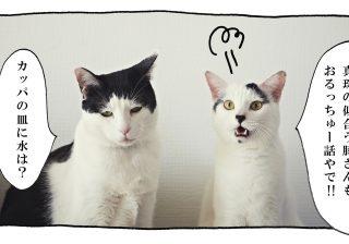 【猫写真4コママンガ】パンチョとガバチョ 「聞かんどいてやろう」#53