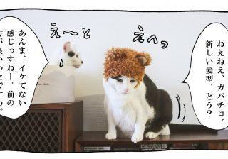 【猫写真4コママンガ】パンチョとガバチョ 「攻め合い」#54