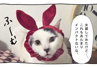 【猫写真4コママンガ】パンチョとガバチョ 「めだってなんぼ」#55