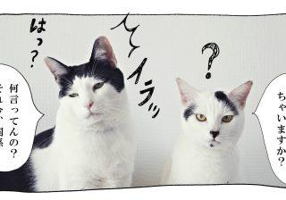 【猫写真4コママンガ】「暑い理由」パンチョとガバチョ #56