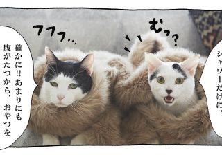 【猫写真4コママンガ】「シャワーだけに!」パンチョとガバチョ #57